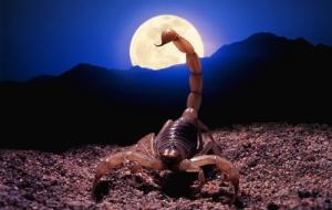 Петля Скорпиона