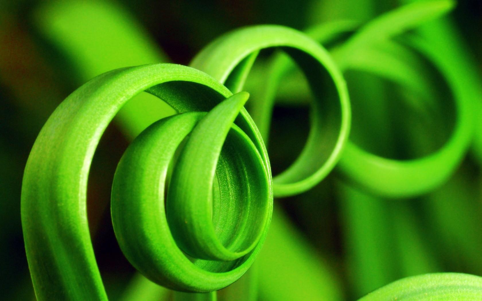 Почему трава зелёная